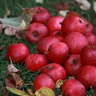 Close-up view of apples on grass — Stock Photo