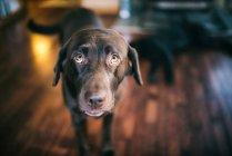 Porträt von Hund suchen in der Kamera — Stockfoto