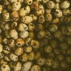 Top closeup view of dirty quail eggs in a heap — Stock Photo