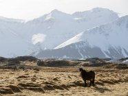 На открытом воздухе пасущихся лошадей — стоковое фото