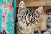 Listrado tabby gatinho — Fotografia de Stock