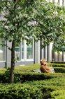 Construction maison et arbres verts en yard, personne en costume d'ours assis sur un banc — Photo de stock