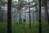 Rear view of man walking in foggy forest — Stock Photo