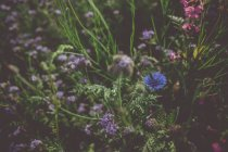 Summer green grass and filed flowers — Stock Photo