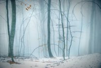 Winter snowy forest — Stock Photo