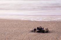 Mussels shells on sandy seashore — Stock Photo