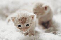 Kittens sitting on blanket — Stock Photo