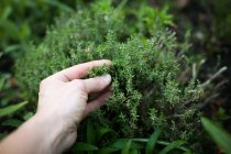 Cropped image of human hand touching green moss grass — Stock Photo