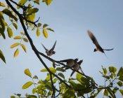 Verde estate foglie sull'albero e gli uccelli di ingoiare — Foto stock