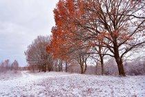 Primera nieve en el Parque otoño - foto de stock