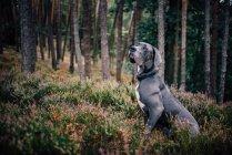 Caresser le chien à la recherche de côté — Photo de stock