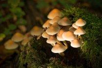 Anbau von Pilzen, close-up — Stockfoto