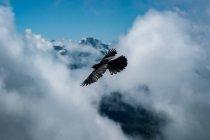 Черный орел летать в облаках над горами — стоковое фото