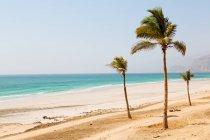 Palme sulla spiaggia di sabbia — Foto stock