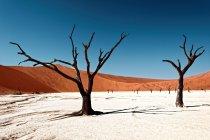 Famoso desierto paisaje con árboles desnudos de la espina de camello muerto, desierto Deadvlei, Namibia - foto de stock