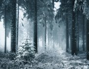 Wild winter forest — Stock Photo