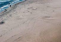 Песчаный пляж и прогулки человек с собакой на побережье — стоковое фото