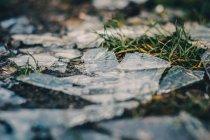 Solo congelado, grama verde e gelo — Fotografia de Stock