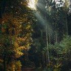 Éclairage du soleil à travers les arbres — Photo de stock