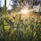Erba verde e raggio di sole di estate, primi piani — Foto stock