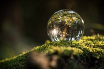 Crystall ball su muschio verde — Foto stock