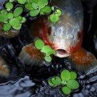 Закри зору риб вдивляючись з води — стокове фото