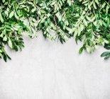 Composizione cornice di foglie esotiche — Foto stock