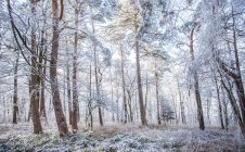 Landscape with frozen forest view — Stock Photo