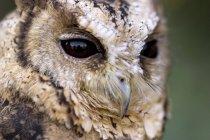 Nahaufnahme der Eule Vogel — Stockfoto