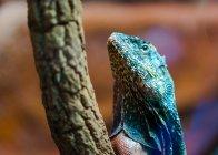 Colorful lizard creature — Stock Photo