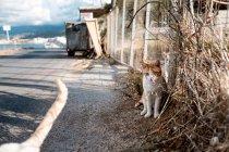 Gatto che si siede sotto il recinto di filo — Foto stock
