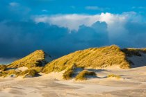 Grass growing on sandy beach — Stock Photo