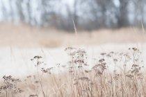 Дикі трав'яні рослини на травою поле — стокове фото