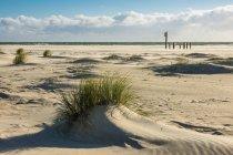 Seelandschaft mit Grass am Sandstrand — Stockfoto