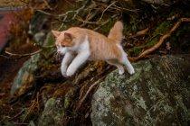Katze im Wald springen — Stockfoto