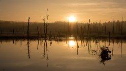 Пейзаж з видом на березі озера — стокове фото