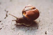Lumaca che striscia lentamente all'aperto — Foto stock