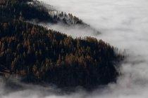 Туман в лісі на ранок — стокове фото