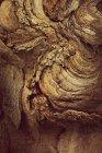 Close-up view of tree bark — Stock Photo