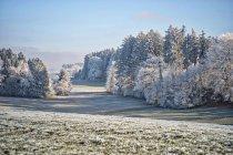 Засніжений ліс взимку — стокове фото
