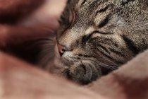 Cat sitting on blanket — Stock Photo
