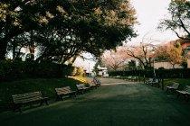 Bancs dans le parc de la ville — Photo de stock