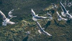 Gabbiani in volo sopra il mare — Foto stock