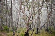 Дерева лісу на час падіння — стокове фото