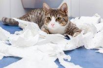 Gato, rodeado de papel picado — Fotografia de Stock