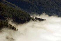 Luftbild auf Sommer Wald mit Wolken — Stockfoto