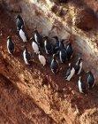 Vista di alto angolo della colonia di pinguini sulla costa — Foto stock