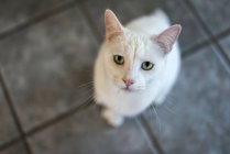 White cat looking at camera — Stock Photo