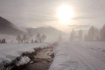 Winterwald am Fluss-Ufer — Stockfoto