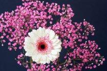 Flores coloridas - foto de stock